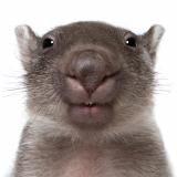 Max-Wombat