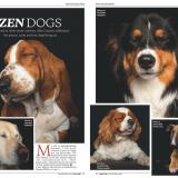 The Lady magazine Zen Dogsa