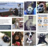 RAC pet cover article