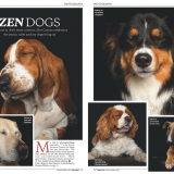 The Lady magazine Zen Dogsa